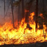 Fire Behavior and Smoke Dispersion in Forested Environments: Don't Ignore Turbulent Fluxes of Heat and Momentum
